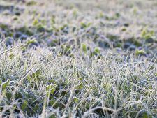 Cum sa intretii gazonul din curte, in timpul iernii! Sfaturi si solutii