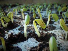Ianuarie, luna perfecta pentru semanarea primelor rasaduri de legume