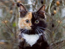 """Yana, pisica cu """"doua fete"""", a cucerit internetul"""