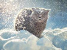 Cum se distreaza pisicile iarna! Razi cu lacrimi! VIDEO