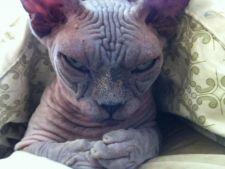 Topul celor mai fioroase pisici. Fac furori pe internet!