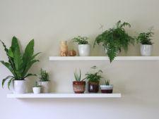 3 plante de apartament ideale pentru incaperile intunecoase
