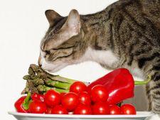 Pisica are voie fructe si legume? Cum i le introduci in alimentatie