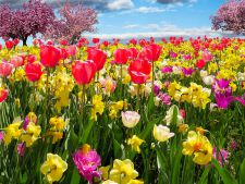 Tot ce trebuie sa stii despre plantarea bulbilor de primavara
