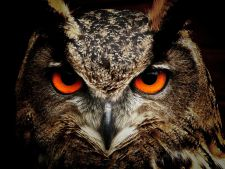 Horoscopul pasarilor sacre! Ce pasare te reprezinta in functie de ziua nasterii