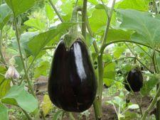 Vinetele – de la seminte la recoltare! Tot ce trebuie sa stii despre cresterea si ingrijirea acestora