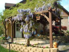 Arbusti ornamentali cu flori, pentru gradini de poveste