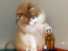 Iubesti pisicile? Ai un motiv in plus de bucurie! A fost inventat parfumul cu aroma de pisica