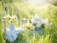 Calendarul gradinarului in luna aprilie! Ce trebuie neaparat sa faci luna aceasta in gradina