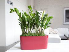 Daca vrei sa dormi bine, ai grija sa nu-ti lipseasca aceste plante din dormitor