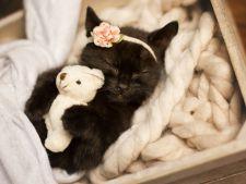 Sedinta foto inedita! Pisica-bebelus care face furori pe internet