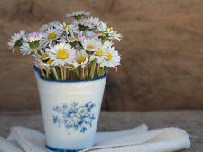 Plantele care te ocrotesc, in functie de ziua de nastere!Ce flori trebui sa ai in permanenta in casa