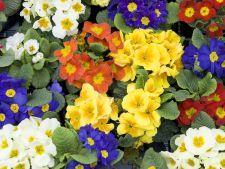 4 plante care iubesc umbra. Vor colora spectaculos gradina
