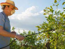 Sfaturi practice pentru pomicultori: care este momentul oportun pentru stropirea pomilor fructiferi?