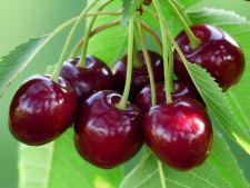 Iunie, luna fructelor savuroase! Ce fructe poti culege din gradina sau livada