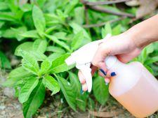 Cum sa prepari acasa pesticid natural pentru plantele din gradina