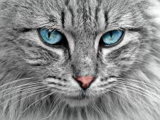 STUDIU: Cum au cucerit pisicile lumea si cand au ajuns in Romania!