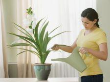 Pleci in concediu? Cum sa-ti protejezi plantele pentru a nu se ofili
