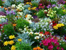 Flori rezistente la canicula! Le poti planta in gradina fara probleme