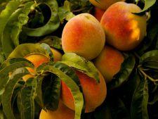 DICTIONAR DE NUTRITIE: Piersicile, alimentul-medicament al verii