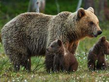 Proteste in Bucuresti! Oamenii cer impuscarea ursilor
