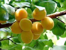 Nu neglija pomii fructiferi in luna iulie