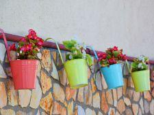 Chibritul si painea, ideale pentru combaterea daunatorilor, in cazul plantelor de apartament