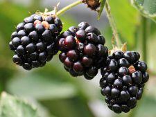 DICTIONAR DE NUTRITIE: Murele, fructele laudate de toti nutritionistii