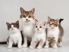 8 august, Ziua Internationala a Pisicilor! Cele mai populare feline care au cucerit internetul