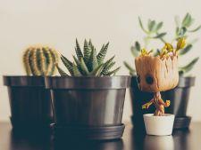 3 plante pe care nu le poti omori! Au nevoie de ingrijiri minime