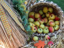 Toamna, anotimpul recoltelor! Cand este momentul perfect pentru a culege fructele