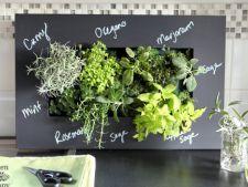 7 plante aromatice pe care sa le cresti in casa