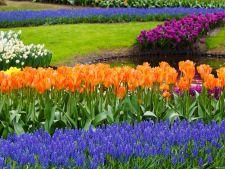 3 flori cu bulbi ce trebuie plantate in gradina toamna