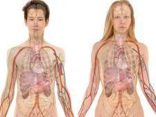 6 parti ale corpului uman care vor disparea in viitor