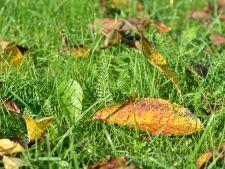 Totul despre eliminarea buruienilor nedorite din gazon – erbicide cu efecte garantate