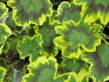 9 motive pentru care frunzele plantelor se ingalbenesc! Cum le salvezi de la moarte