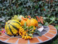 Gradinaritul in luna noiembrie! Activitati de gradinarit pe care sa le bifezi in ultima luna de toamna