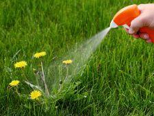 Otetul, benefic pentru plantele tale! Tu il folosesti?
