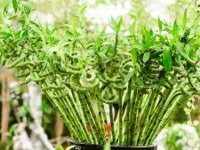 Plantele de apartament care aduc noroc! Cum sa atragi prosperitatea in casa ta