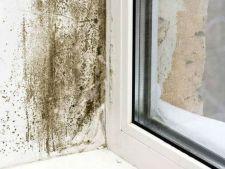 Anotimpul rece, momentul in care apare mucegaiul in locuinte! Cum sa scapi rapid de el
