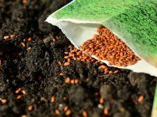 Planteaza primele rasaduri pentru gradina de primavara pana la finalul lunii ianuarie