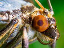 Extraterestrii din gradina! Insecte benefice versus insecte daunatoare