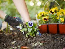 Calendarul gradinarului in februarie. Ce flori, legume si arbusti sa plantezi in Luna lui Faurar