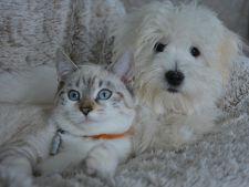 4 lucruri din casa ce pun in pericol viata animalelor de companie!