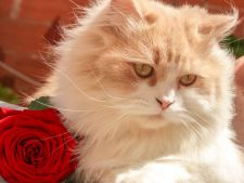 Primavara naparlesc pisicile! Ajuta-ti pisica sa treaca usor peste aceasta perioada dificila