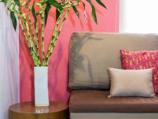 4 plante de apartament care atrag norocul si prosperitatea