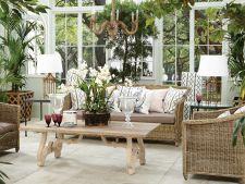 Adu natura in casa ta! Cum sa transformi locuinta intr-o gradina in miniatura