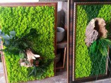 Ce sunt plantele stabilizate si cum le poti folosi in decorul casei