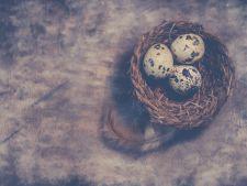 Adevarul despre ouale de prepelita! Explicatiile nutritionistului