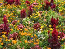 3 flori superbe pentru gradina de toamna! Trebuie sa le plantezi pana la finalul lui iunie